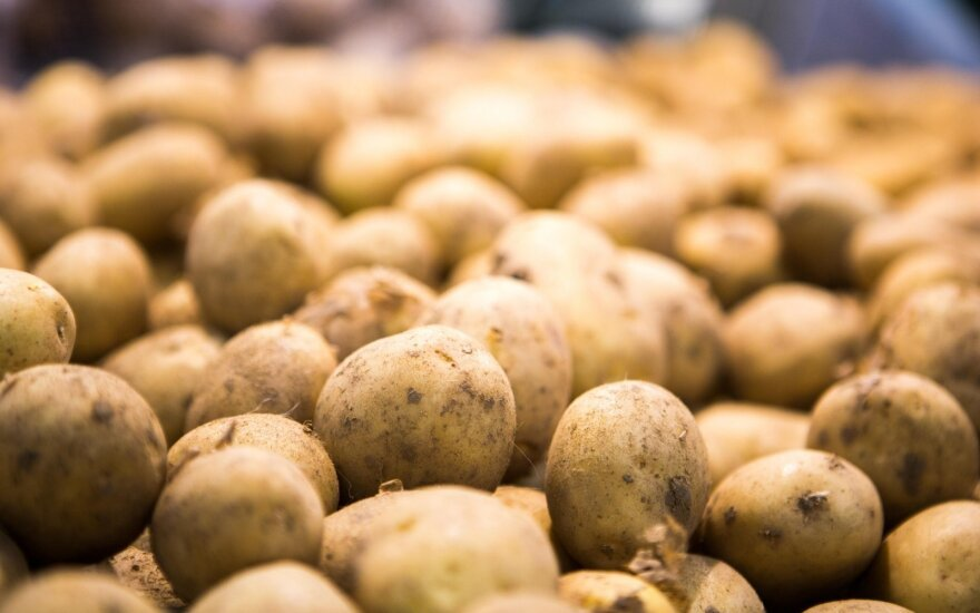 Potato plague detected in Lithuania