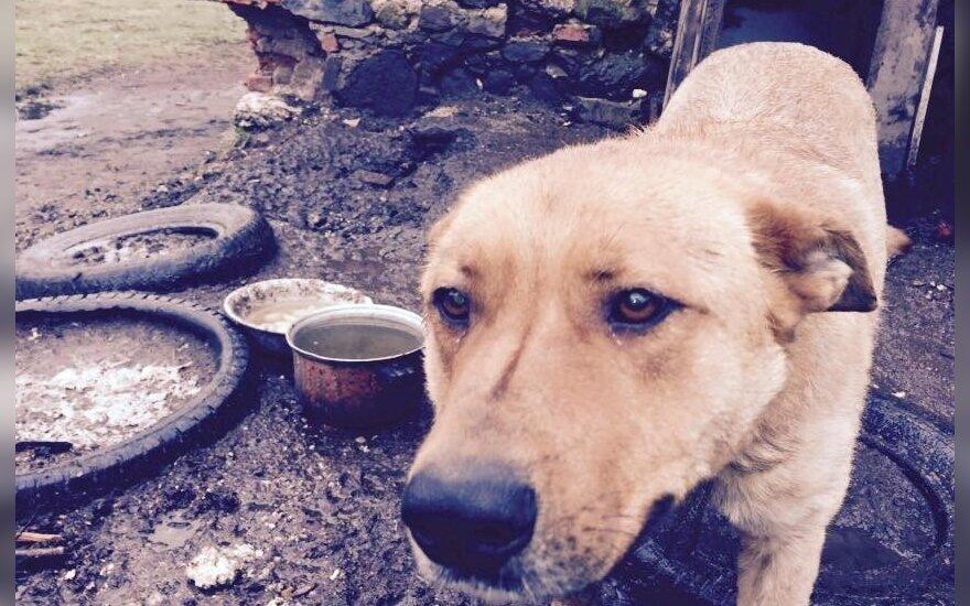 Padėkite: jų namai sudegė ir jie liko niekam nebereikalingi...