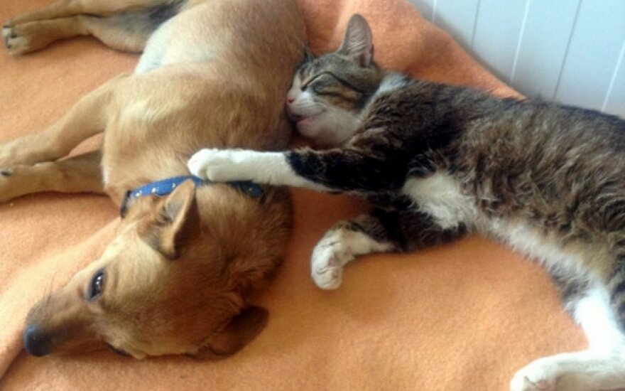 Ar gali šuneliai draugauti su katėmis?
