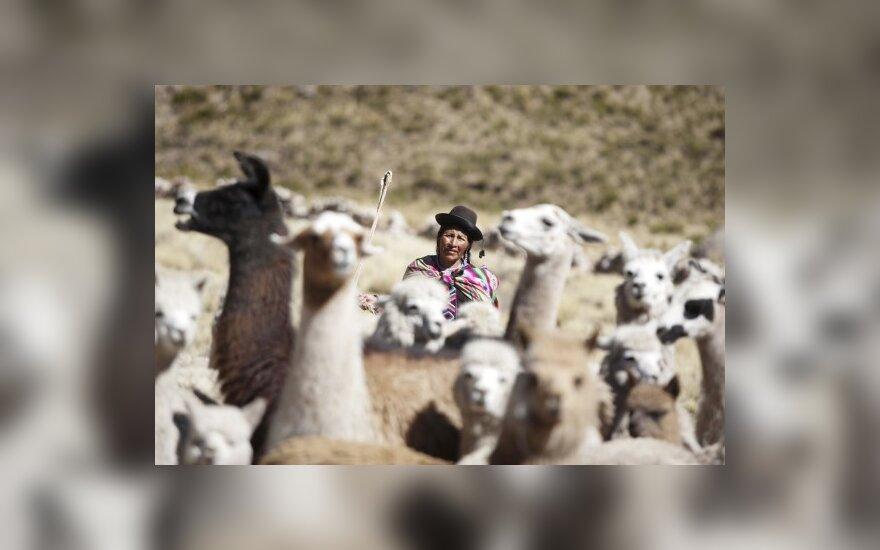 Peru dėl šalčių įvesta nepaprastoji padėtis