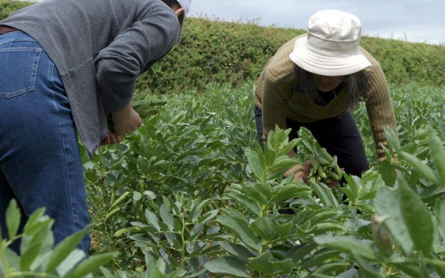Dirbančiųjų JK žemės ūkyje laukia nemalonumai