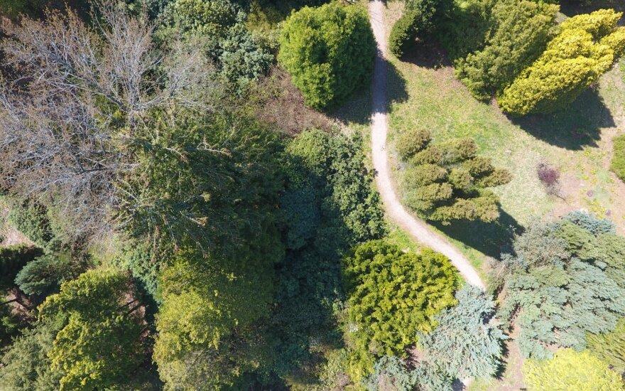 Dubravos arboretumas