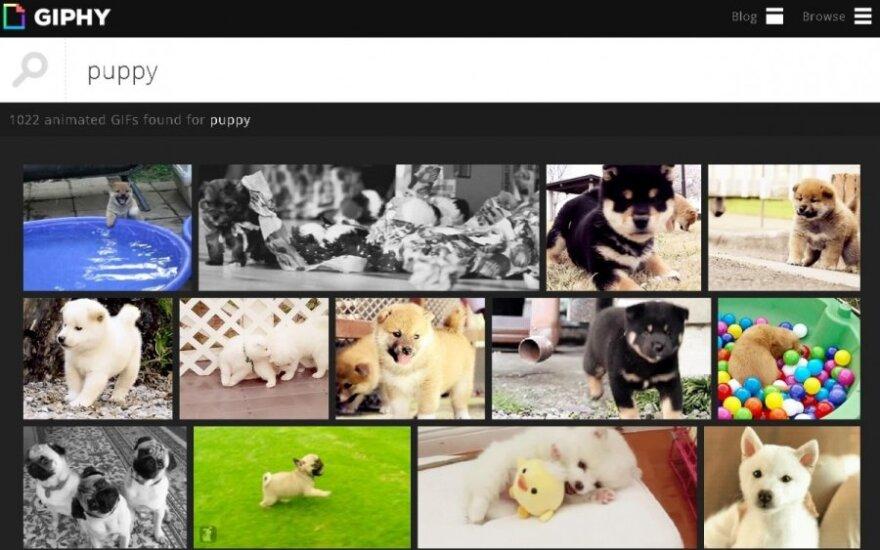 Giphy.com paieškų variklis