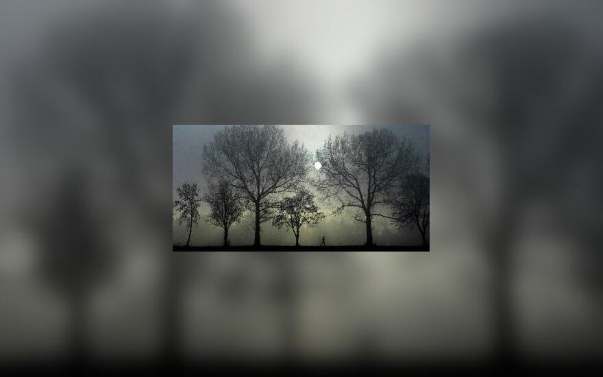 rūkas, miškas, medžiai