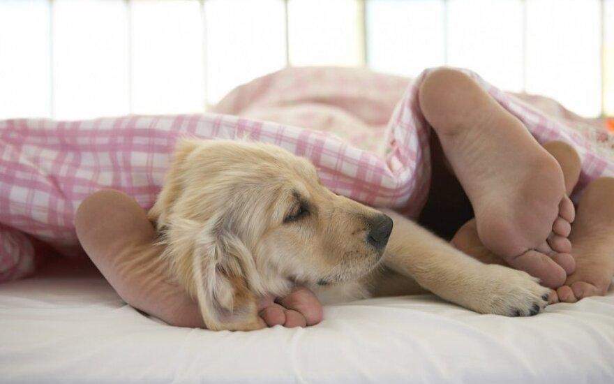Kaip užmigti per karščius: patarimai, gudrybės, rekomendacijos