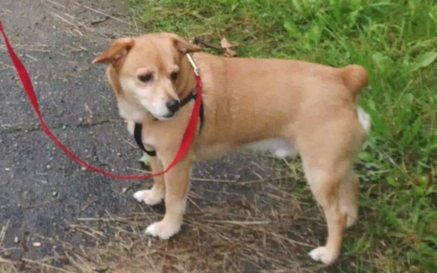 Dukra labai liūdi: ieško dingusio šunelio Rubio