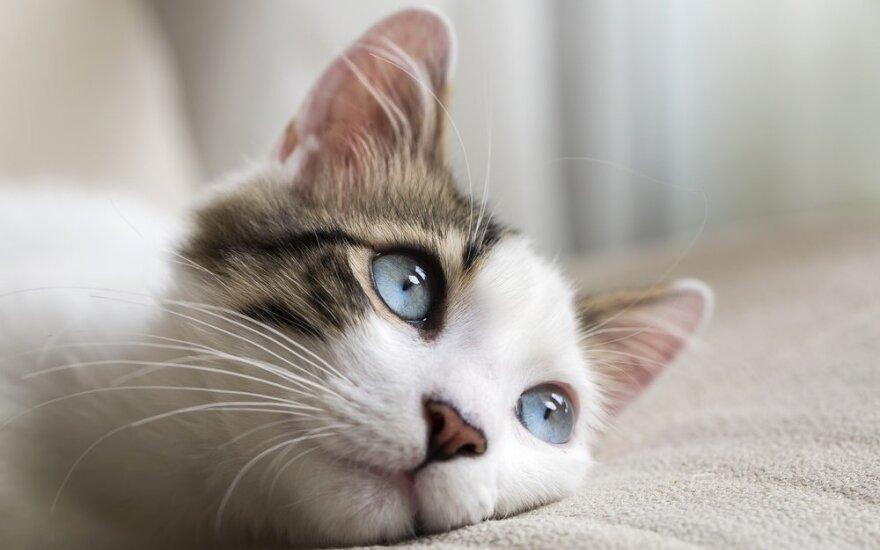 Murkiantys gydytojai – katės