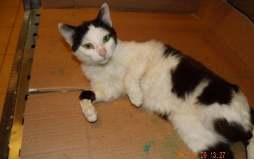 Sanitarinėje tarnyboje naminiai katinėliai labai ilgai laukia išsivadavimo