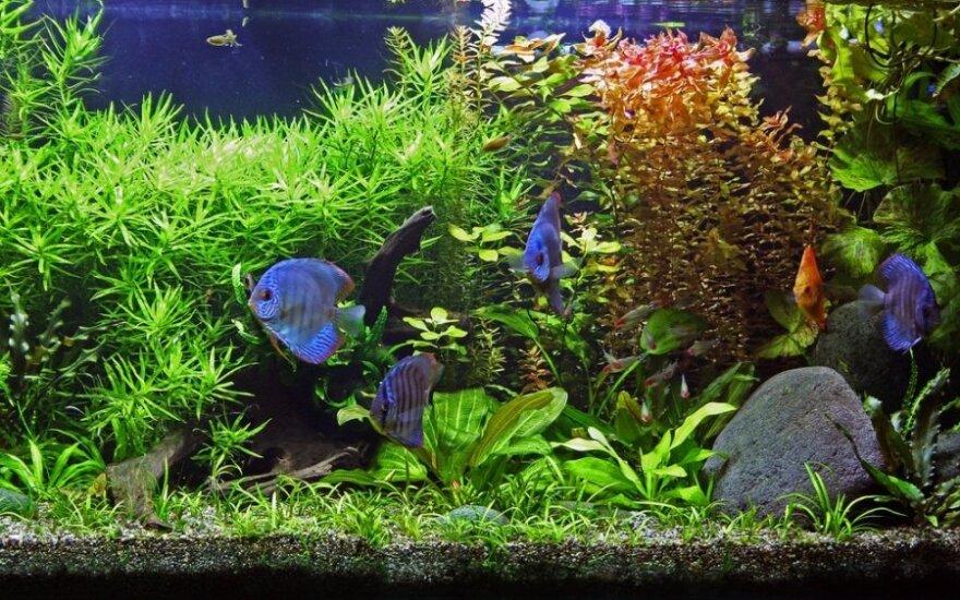 11 žingsnių, kaip įsirengti akvariumą