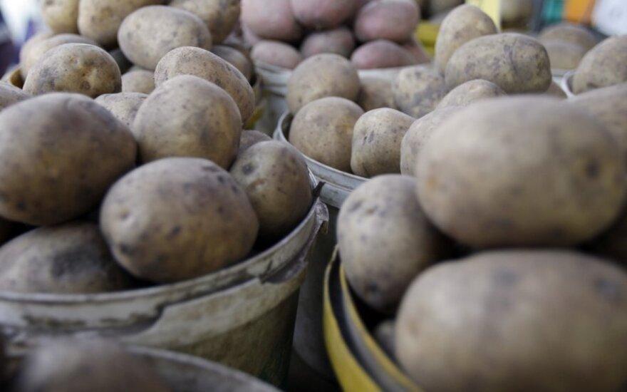 Didieji Lietuvos ūkininkai įspėja dėl laukiančio bulvių trūkumo