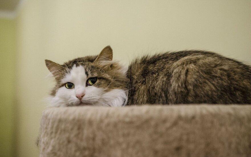 Labiausiai nustelbta prieglaudos katytė Sema ieško namų!