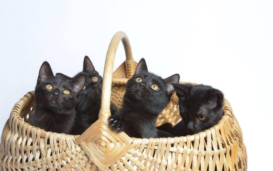 Juoda katė – bijoti ir nekęsti ar mylėti ir dievinti?