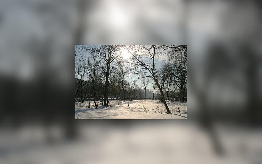 Žiema, sniegas, miškas, medžiai