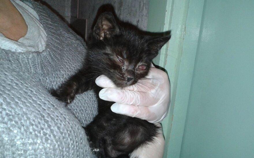 Kad išgelbėtų kačiukus nuo mirtinos ligos, reikia paramos: padėkite!