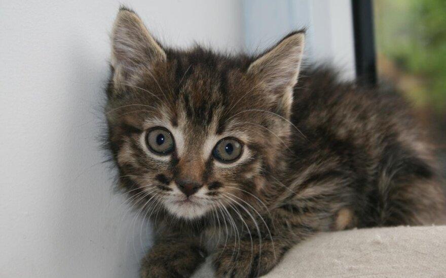 Spalvų pliūpsnis: kačiukai ieško atsakingų šeimininkų!