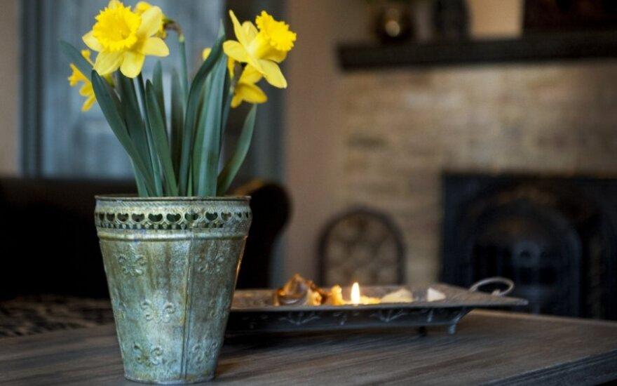 Girta moteriškė sugyventinį talžė dekoratyvine vaza
