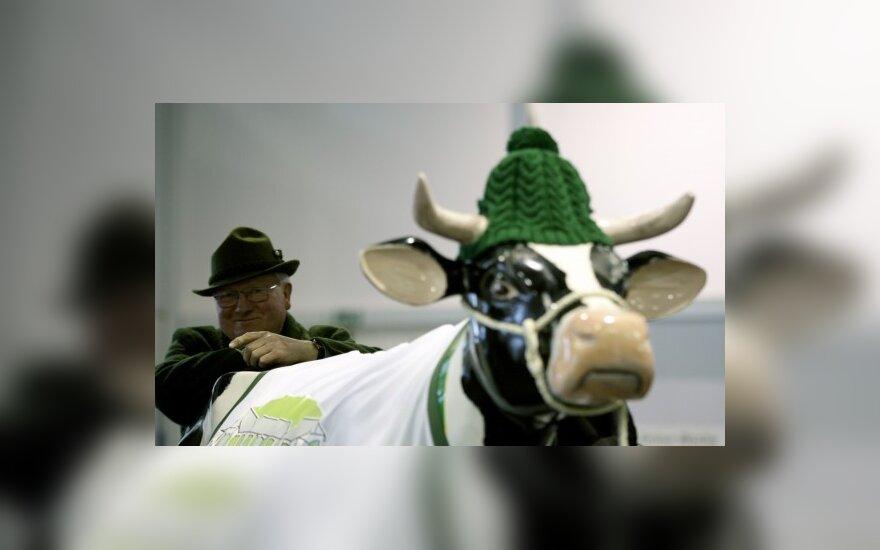 Talino centre kronas į eurus keičia karvė