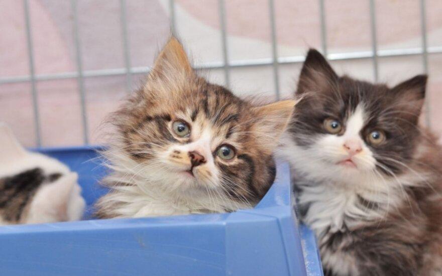 Iš garažų išgelbėti 2 mėn. kačiukai ieško namų!
