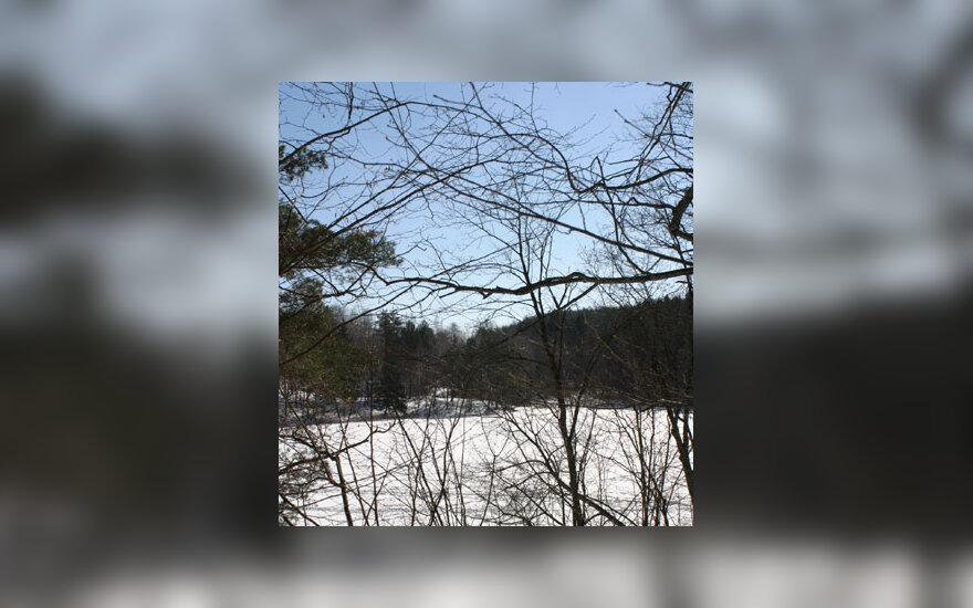 Miškas, žiema, sniegas