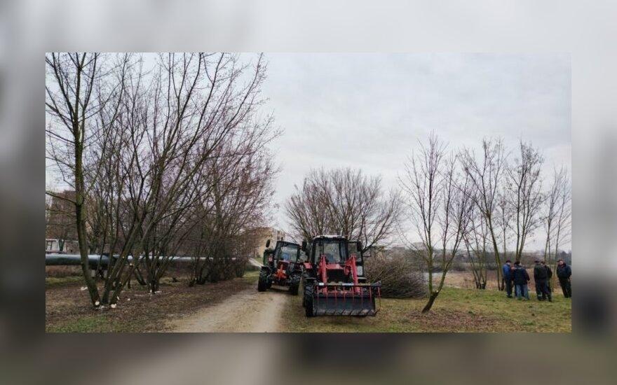 Kėdainiečiai sunerimo: kodėl Nevėžio pakrantėje kertami medžiai?