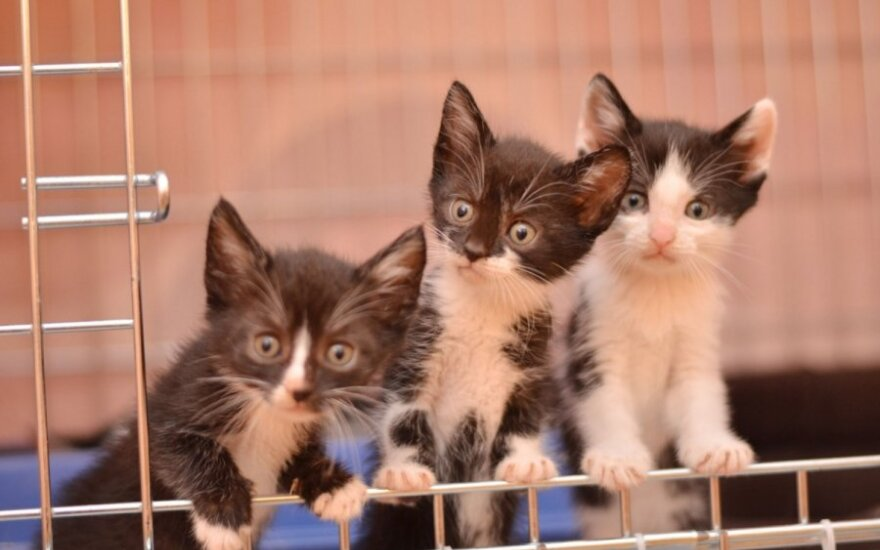 Mirguliuojantis kačiukų penketukas svajoja, kad juos pamiltų!