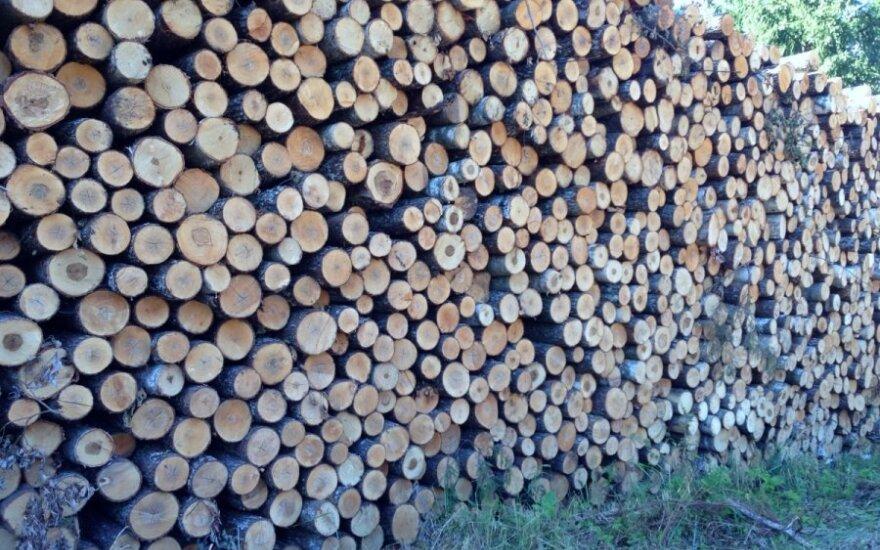 Ignalinos miškų urėdijoje netinkamai tvarkoma mediena