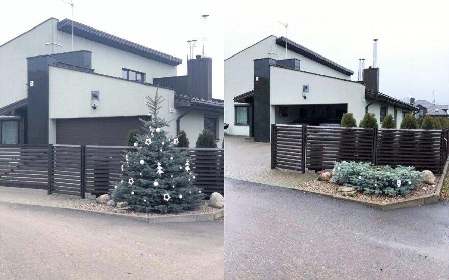 Pavogta Kalėdų eglė