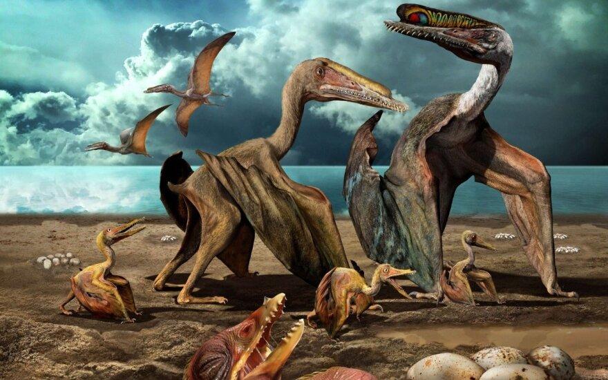 Dinozaurai Hamipterus tianshanensis