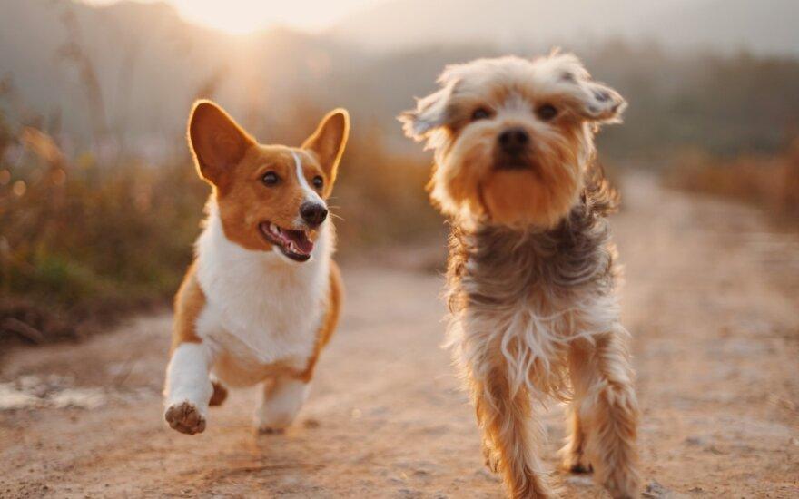 Šunys
