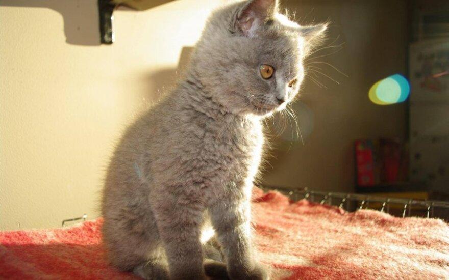 Šeima labai prašo pagalbos: dingo jų katinėlis Martis