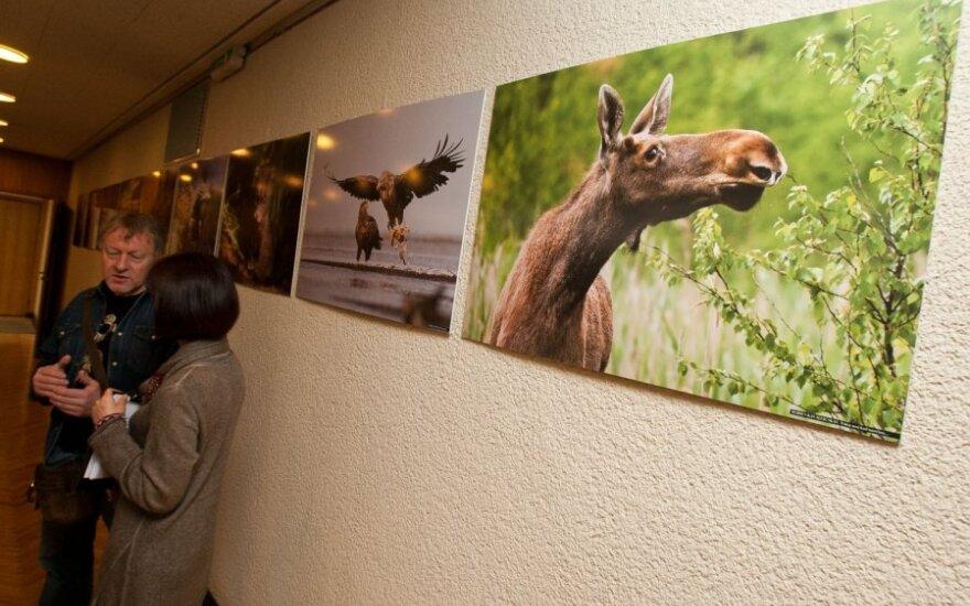 """Lietuvos laukinės gamtos fotografijų konkurso """"Gintarinis žaltys 2011"""" apdovanojimai"""