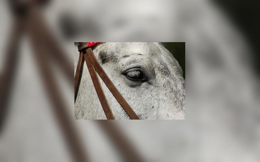 Arklio akis