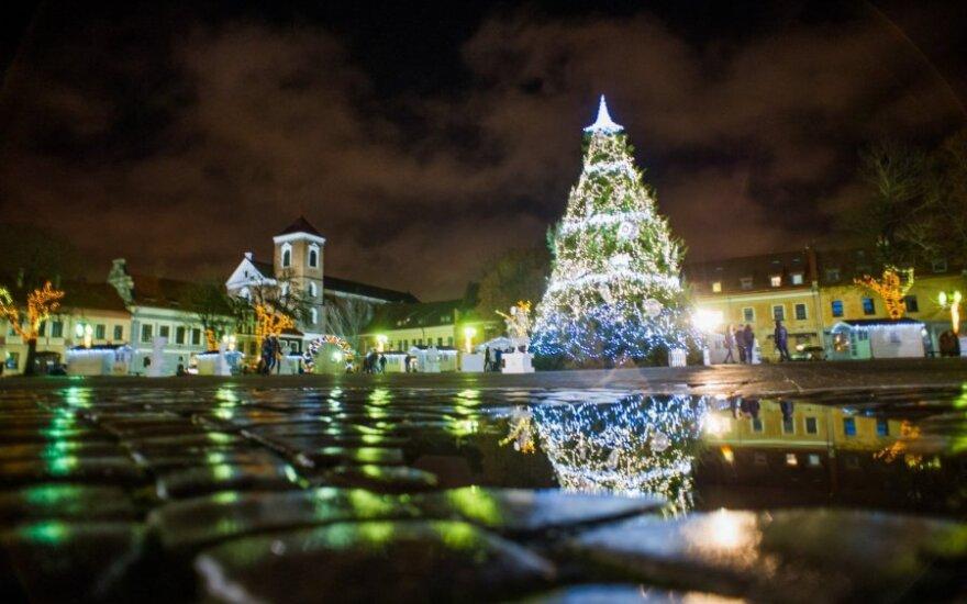 Kauno Kalėdų eglė – ir saulėtoje Tenerifėje