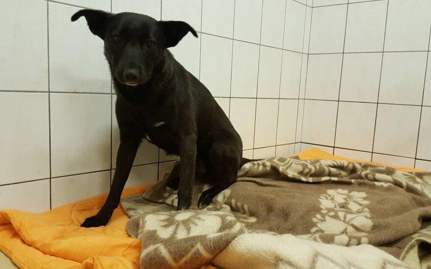 Vilniečius sujaudino šuns likimas: ar taip turi elgtis gyvūnų globėjai?