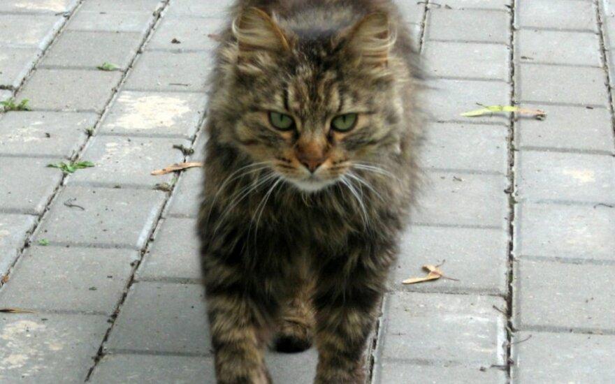 Antakalnyje atklydo naminis katinėlis