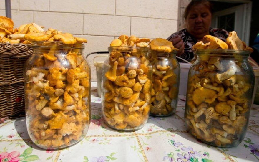 Parduodamos miško gėrybės turi atitikti nustatytus kokybės reikalavimus