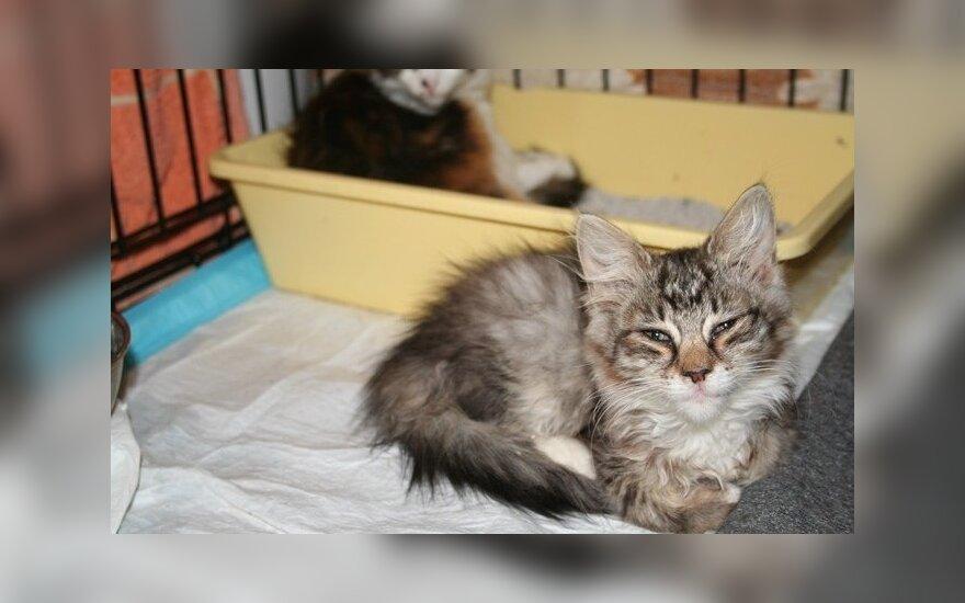 Mažiems katinėliams reikia namų
