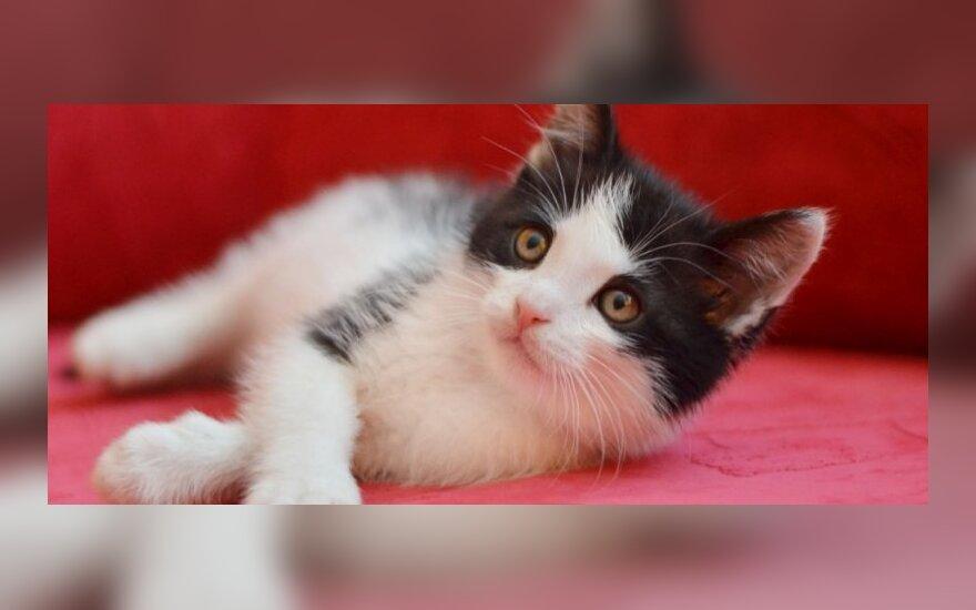 Mažylis, kuris pavogė kito kačiuko istoriją- Selfis!