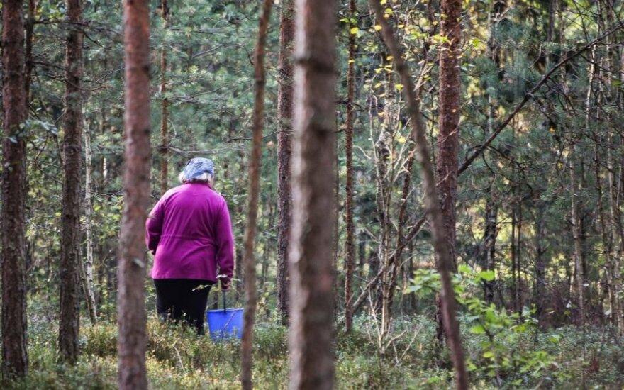 Miškų ekonomika: kiek vertos gėrybės ir kaip jas išsaugoti