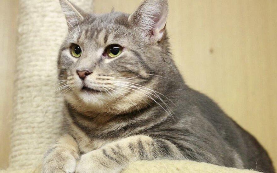 Atsargiai nepažįstamus žmones vertinančiam katinėliui Smokui reikalingi namai