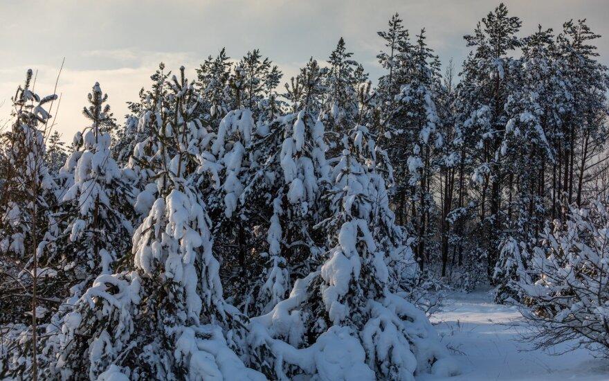 Miškininkai paskaičiavo, kokią žalą miškams padarė stiprus snygis: labiausiai nukentėjo 7 rajonai