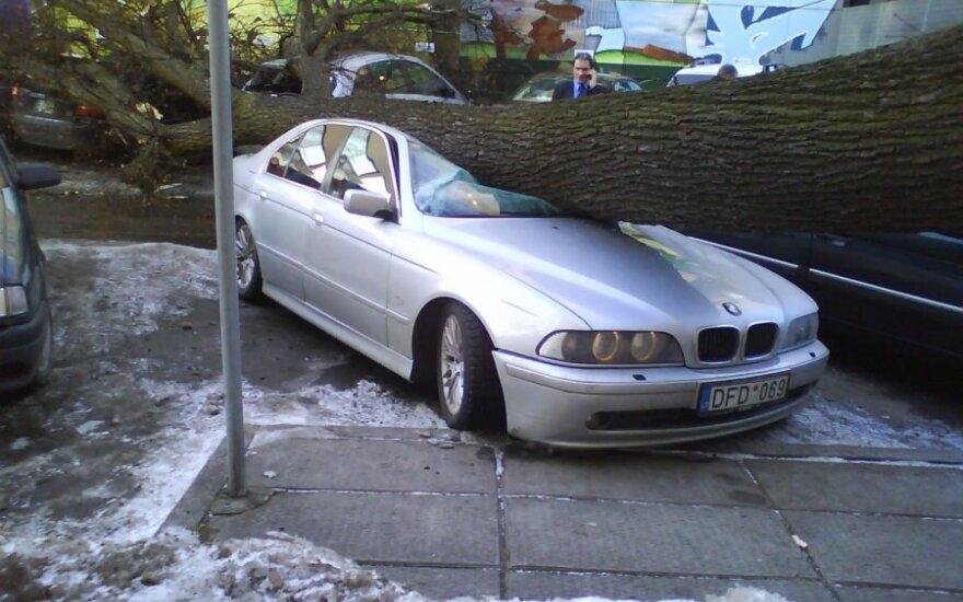 Medis užgriuvo ant automobilio. G.Narkaus nuotr.