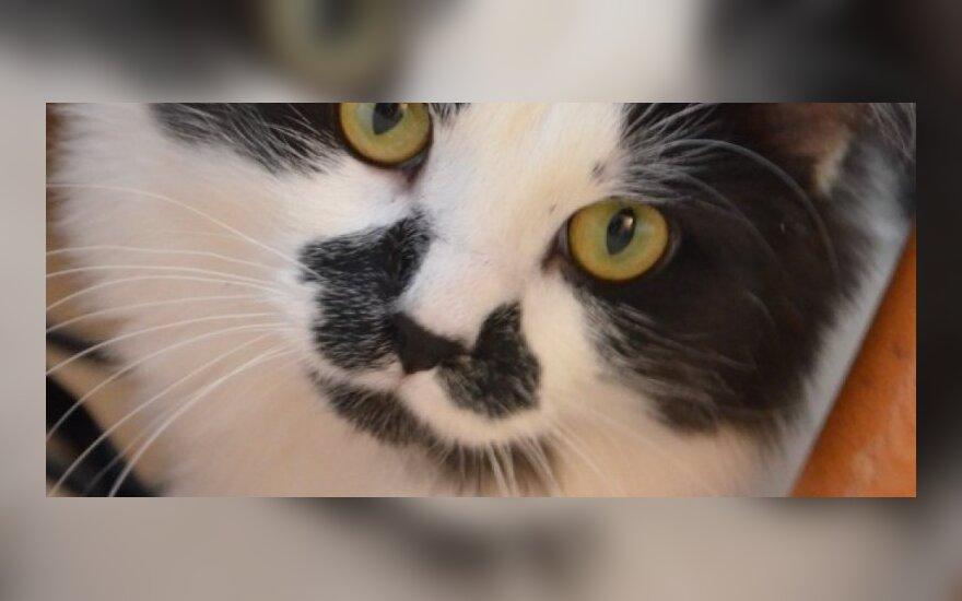 Katinas Steponas Batoras ieško namų!