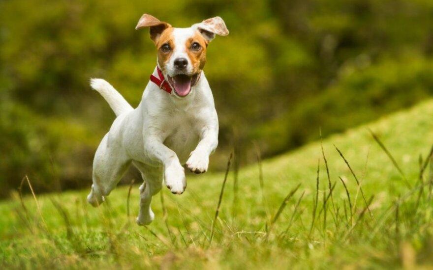 Kaip išsirinkti ir išauklėti šuniuką