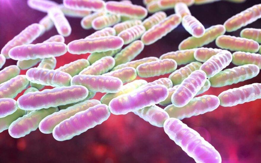 Bakterija, sauganti nuo infekcijų ir senėjimo: būtina gauti kasdien