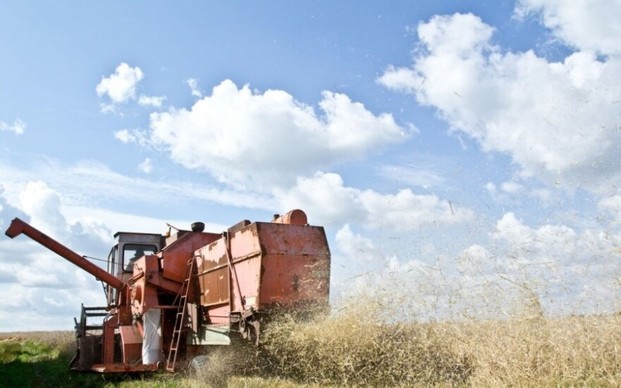 Grain price may continue to fall, expert says