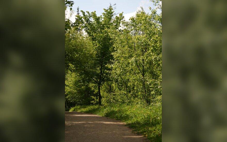 Miškas, medžiai