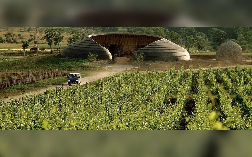 Tokajaus vynuogynas