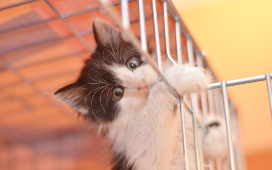 Katinas, kuris būtų mieliausio kačiuko konkurso nugalėtojas!