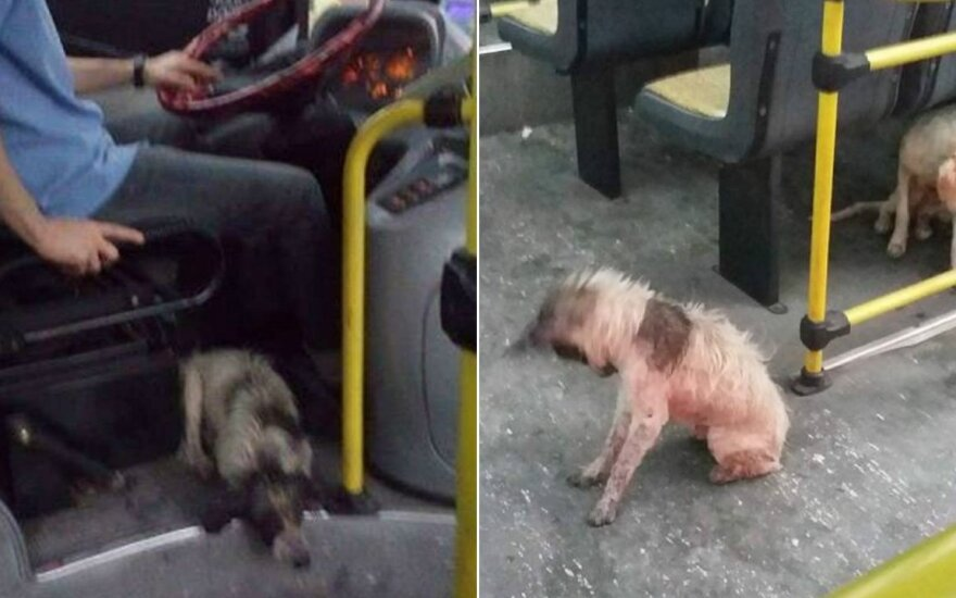 Vairuotojas išgelbsti šuniukus